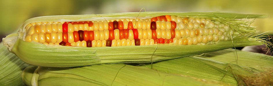Are GMOs Ethical