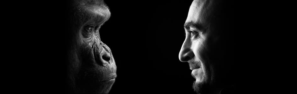 Do Babbling Bonobos Decipher the Evolutionary Secrets of Baby Talk?