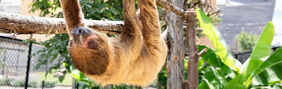 "PETA: Insults Like ""Pig,"" ""Sloth"" Hurt Animals"