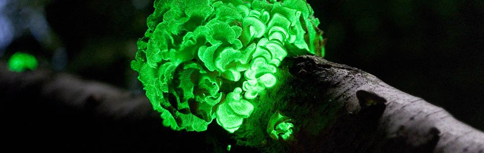 God S Design For Bioluminescence Answers In Genesis