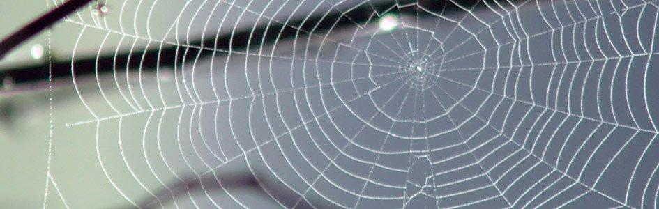 Bird-Saving Spider Webs