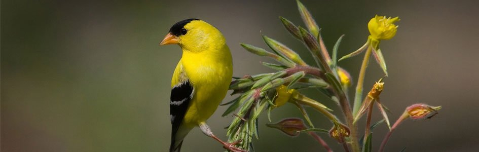 Bird Speciation from the Flood to the Present