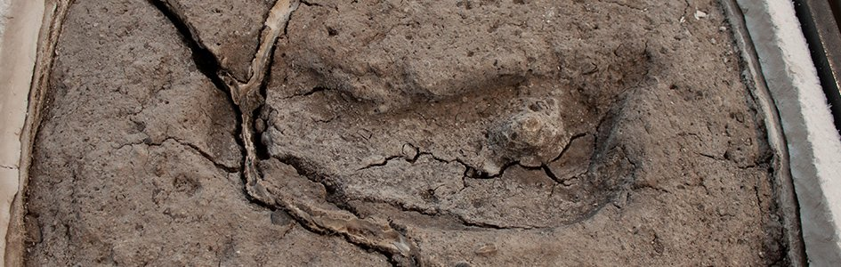Chile Footprint Fossil