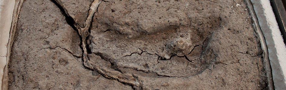 Chile Huella Fósil
