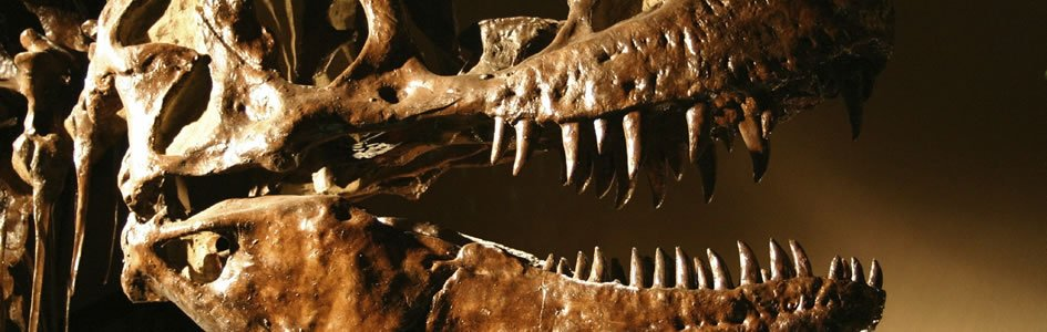 Dino-Parts Emerge from Fossil Record