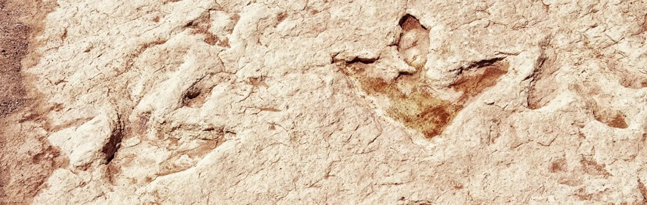 Fossilized Footprints and History of Dinosaurs