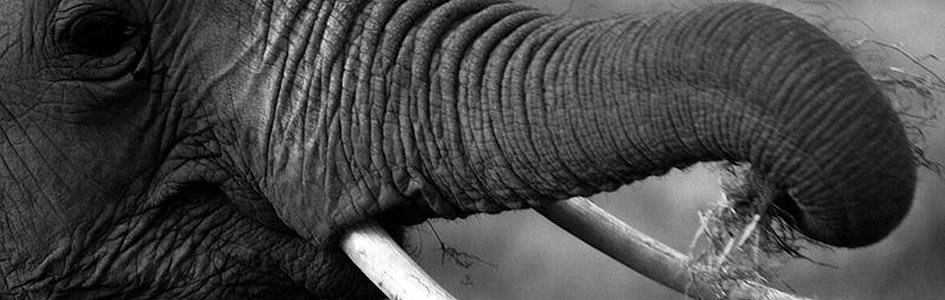 The Elephant, the Blind Men, and the Faulty Analogy