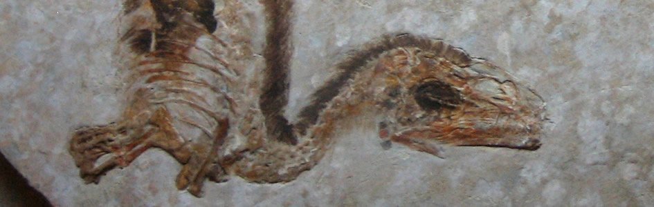 Feathered Fossil: Still a Bird