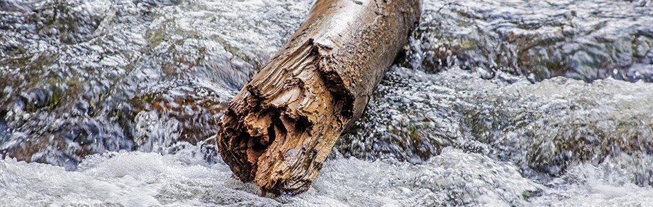 Log Floating in Water