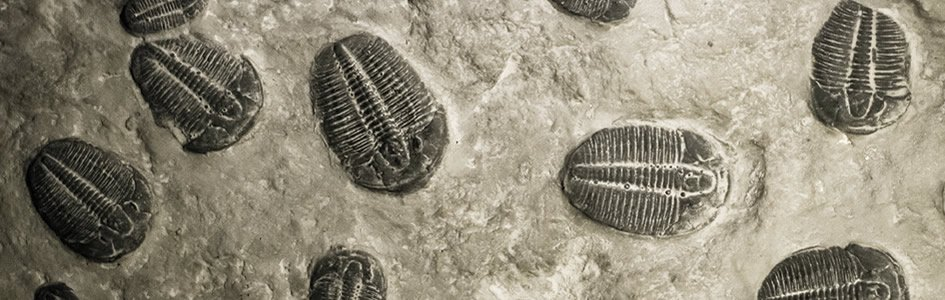 Canada's New Cambrian Explosion: Burgess Shale Chapter Two