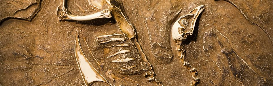 3D Fossil Images Force Evolutionists to Revise Terrestrial Story