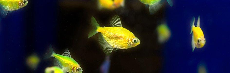 Glowing Fish