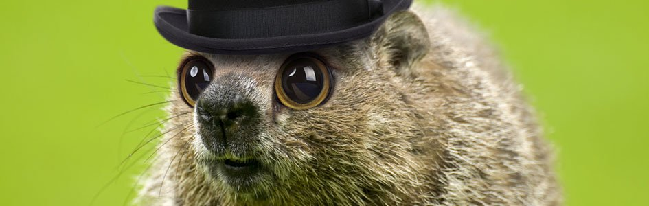 Groundhog in Hat