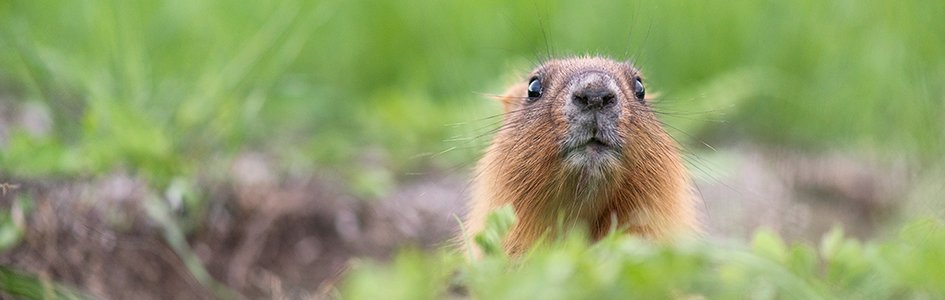 """Groundhog Day and Other Weather """"Prophecies""""   Answers in ..."""