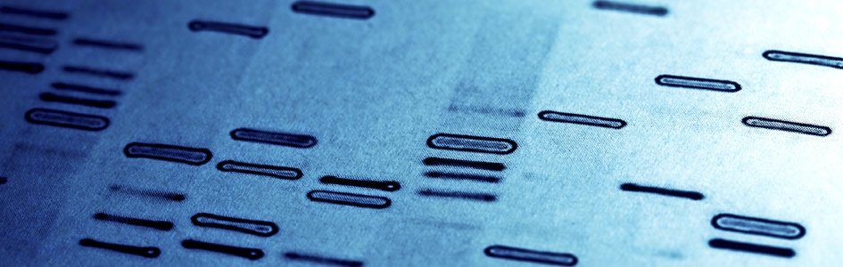 Human Genome Project Complete ... Again
