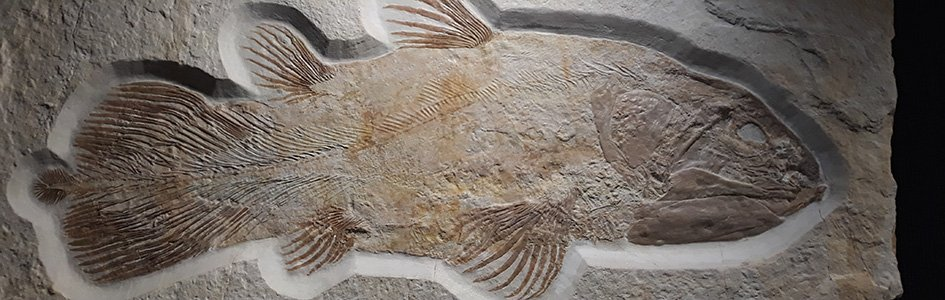 """Is This Famous Fish a """"Living Fossil""""? Well, That Depends on Your Assumptions"""