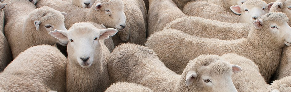"Jacob's Odd ""Breeding Program"" of Genesis 30 | Answers in"