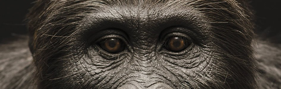 "Evolutionists ""Go Ape"" Over New Fossils"