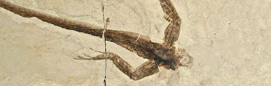"""More Soft Tissue in """"Old"""" Fossils"""