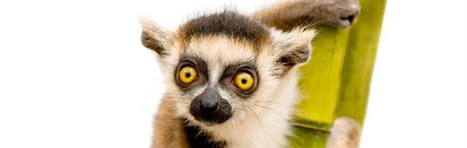 Mysterious Madagascar