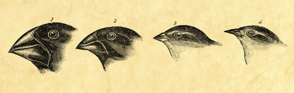 Reverse Evolution Causes Darwin's Finches to Go Missing?