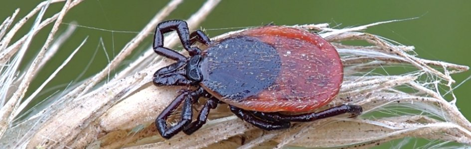 The Origin of Ticks and the Genesis and Emergence of Lyme Disease