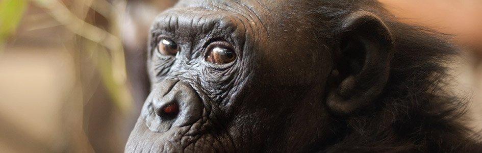 Primates-to-People Ploys