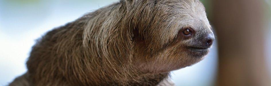 Sloths: Slow on Purpose