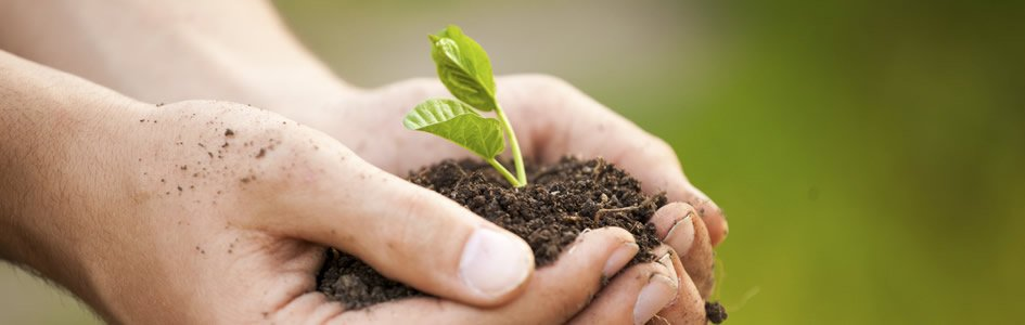 Is Stewardship the Same as Going Green?