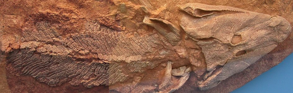 Fossil Gap Closes More Missing Links