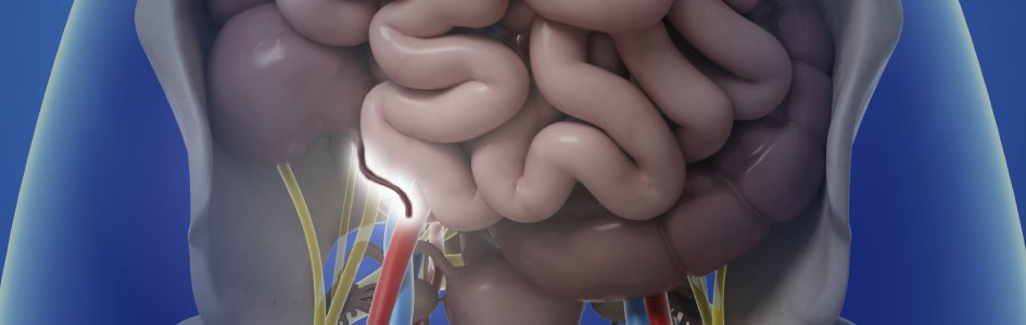 Appendix May Harbor Useful Bacteria
