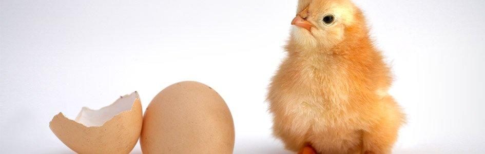 [만화 – 창조주 하나님] 닭이 먼저일까? 달걀이 먼저일까?