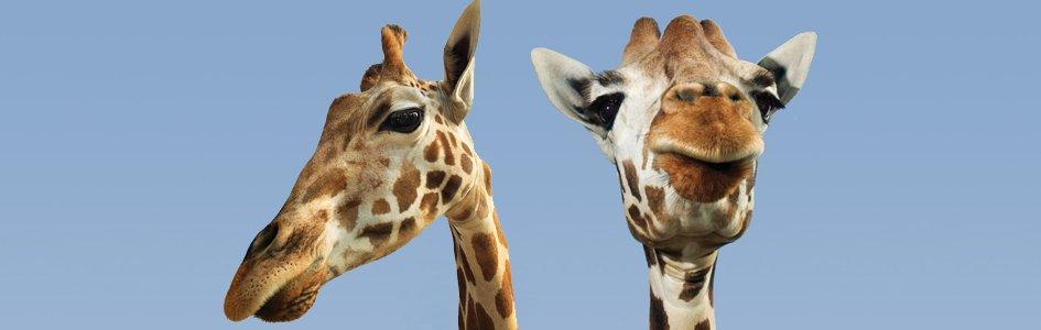 Zoos—Evolutionary Propaganda or Teaching Opportunity?