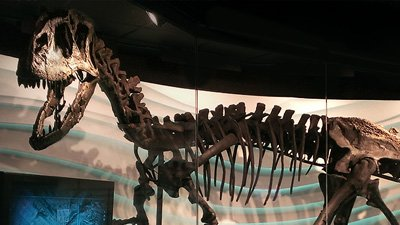 Creation Museum Announces Results of Allosaurus 3-D Imaging Tests