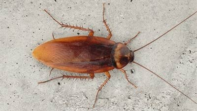 The Indestructible Cockroach