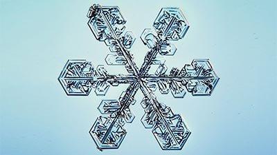 Snowflakes—The Patron's Gift