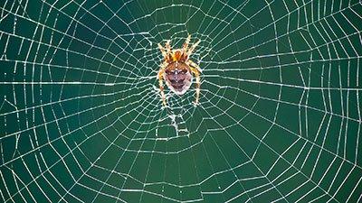 The Ultimate Web Designer