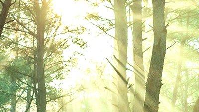 Talking Trees—Secrets of Plant Communication