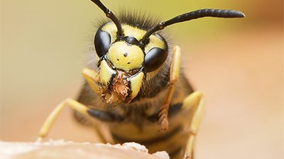 Why Are Wasps So Evil?