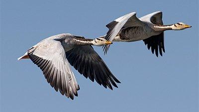 Geese: High-Altitude Engineering