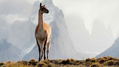 Camel Diversity—Spitting Image