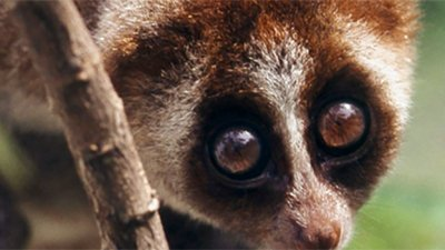 Slow Loris: Fuzzy Can Be Fatal