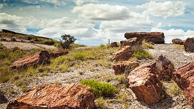 Petrified Forest National Park—Painting A Different Picture