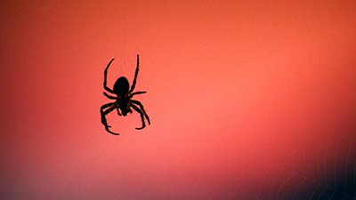 Angry Spiders? Blame, You Guessed it, Climate Change