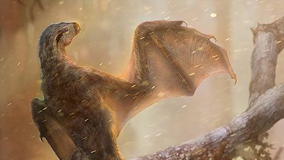 """Bat-Wing Dinosaur""—A Clumsy Flier?"