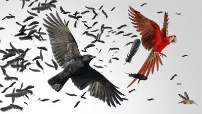 The Big Bang of Bird Evolution?