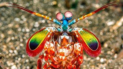 Biological Cloaking Device Renders Shrimp Larvae Invisible