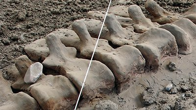 Body Parts Fossils