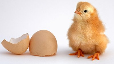 Which Came First—The Chicken or the Egg?