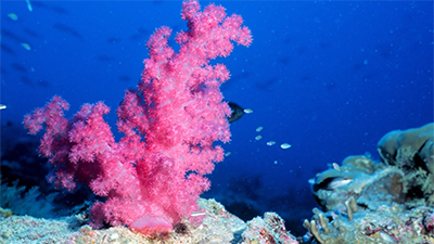Giant Coral Reefs—Too Old for a Young Earth?